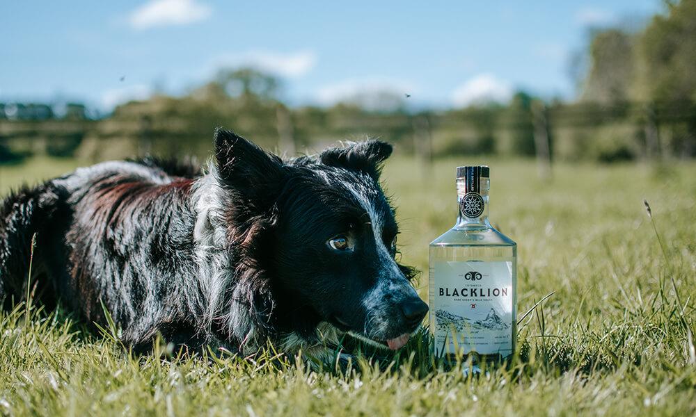 Black Lion Vodka sheepdog